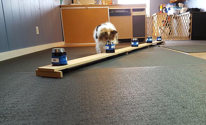 Sniffer dog 4