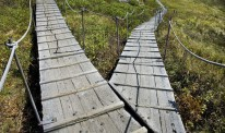 forked wooden pedestrian walkway