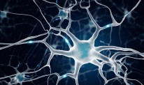 Growth factors neurons