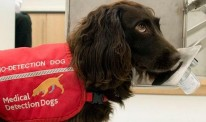 Sniffer dogs lead