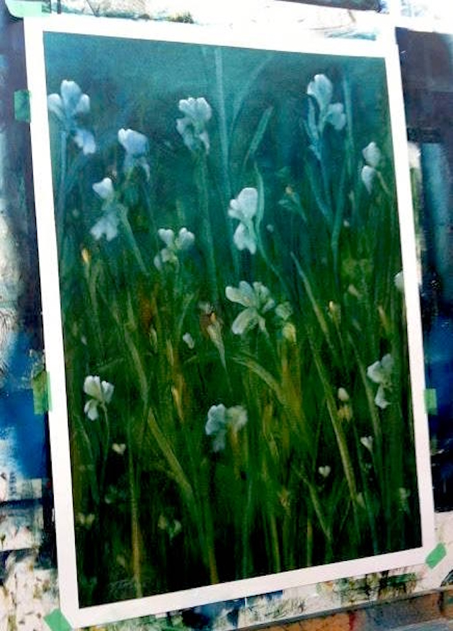 Irises by artist Timothy John