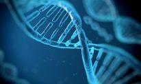 DNA molecules genetic database