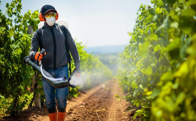 Agriculture worker. Young farmer spraying pesticides